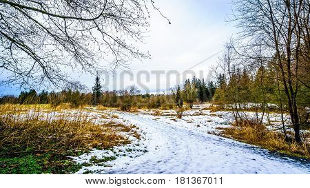 Winter landscape with snow covered path and grass fields in Campbell Valley Park in the township on Langley in British Columbia, Canada on a nice winter day