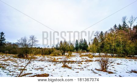 Winter landscape with snow covered grass fields in Campbell Valley Park in the township on Langley in British Columbia, Canada on a nice winter day