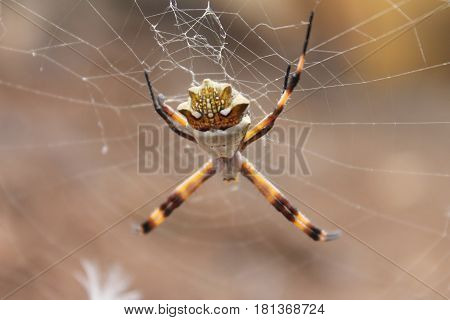 Colorful and beautiful spider on its spiderweb
