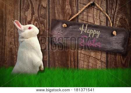 Side view of cute rabbit against wood panelling