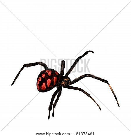 spider with a big belly crawls sketch vector graphics colored pattern with red spots