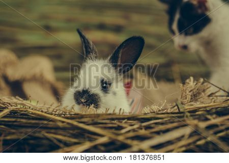 Cute Small Rabbit And Blurred Little Cat