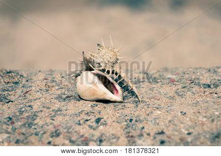 Beautiful Marine Snail Shells In Sea On Beige Background