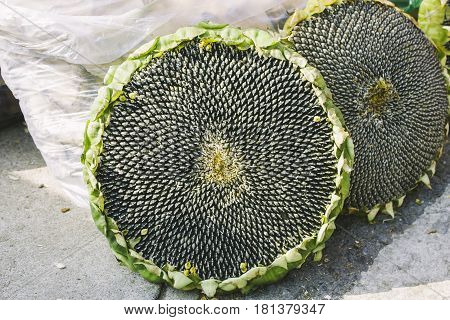 ripe seeds in Sunflower head seeling on road