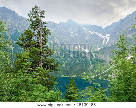 View of the mountain lake through the branches of trees with an old pine in the foreground on the background of the craggy mountain slopes at cloudy day