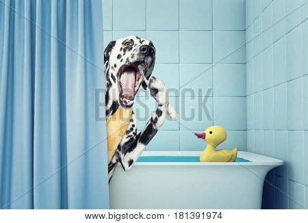 cute dalmatian in the bath clean the teeth