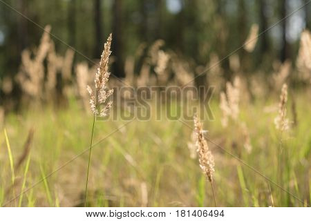 Wheat ears against the background of the field on a summer day
