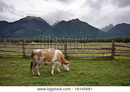 Young calve at the meadow against a fence and forest. poster