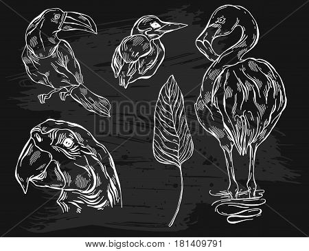 Hand drawn vector graphic lined illustrations set of tropical birds toucan, parrot macaw, flamingo and kingfisher.Tropical birds isolated on black.Exotic tropical bird of paradise collection set.