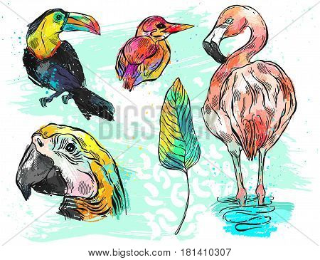 Hand drawn vector graphic color abstract illustration set of tropical birds toucanparrot macawflamingo and kingfisher.Tropical birds isolated on white.Exotic tropical bird of paradise collection set
