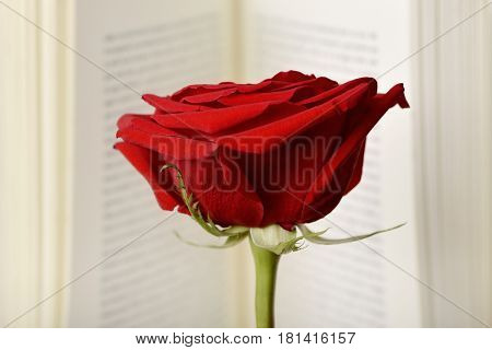 closeup of a red rose in an open book for Sant Jordi, the Catalan name for Saint Georges Day, when it is tradition to give red roses and books in Catalonia, Spain