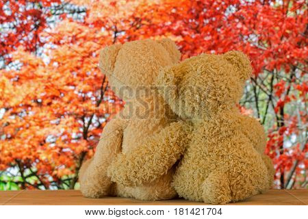 Back of a couple cute brown bears sitting on wood hugging each other with blurred red Japanese maple Autumn leaves background