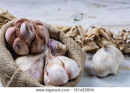Garlic. Dried French garlic. Red garlic. Violet garlic.Garlic background. garlic bulbs on white
