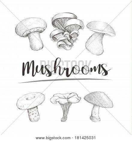 Mushrooms sketch vector hand illustration. Set mushrooms