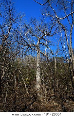 Trees In Ankarana National Park, Madagascar Wilderness