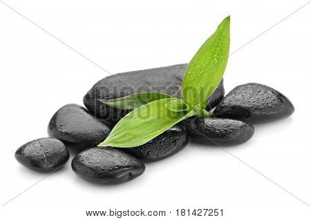 bamboo on the zen basalt stones isolated on white