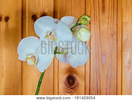 White orchid (Phalaenopsis ) on wooden background