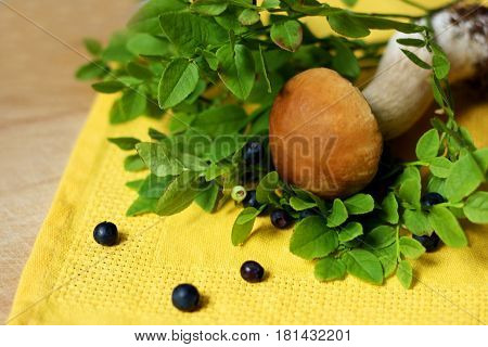 Forest plants. Sprigs of blueberries with ripe blue berries are on the yellow napkin and old wooden surface. Next to the berries is the mushroom.