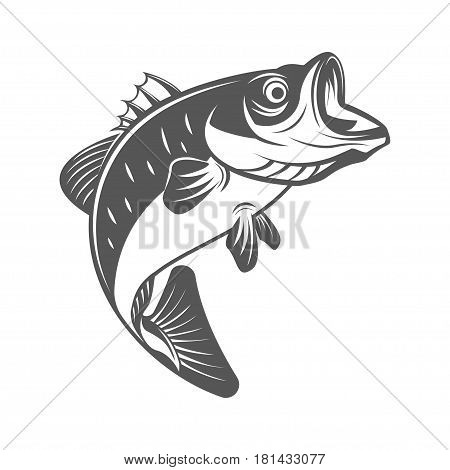 Bass fish vector illustration in monochrome vintage style. Design elements for logo, label, emblem.isolated on white background
