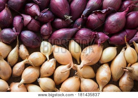 Yellow and purple onions for sowing. Onions background.