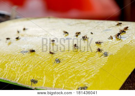 Protection from flies on food. Trap for flies
