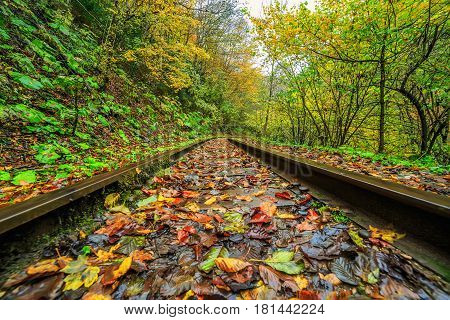 Railroad tracks go through autumn mountain forest