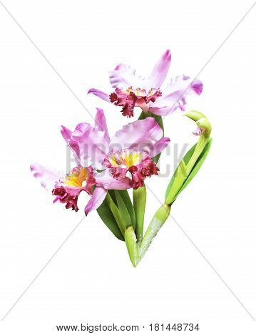 Artificial bouquet orchid flower isolated on white backgrund