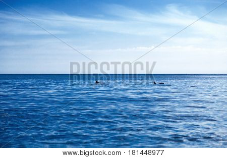 Two dolphins in the deep blue sea and sky