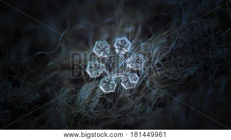 Macro photo of real snowflake: medium size snow crystal of star plate type with simple shape, six short, broad arms with complex inner pattern, and large, transparent central hexagon with simple pattern inside. Snowflake glitters on dark woolen background