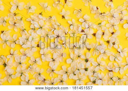 Cherry, Apricot Flowers As Natural Floral Background On Yellow Color
