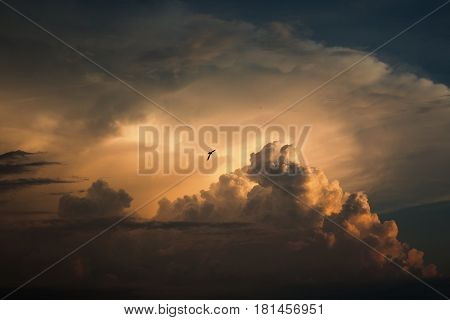 Blue sky with white and blue and pink clouds. Clear sky. Bird in the sky. Beautiful sky. Evening sky. The bird flies in the sky. Yellow and blue cloud in the sky.