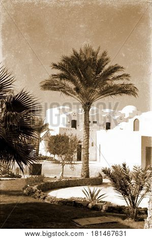 retro photo, on which image of three palm trees near white structure in Egypt