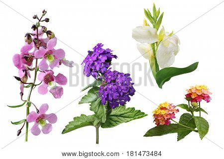 Set of Snapdragon Antirrhinum majus, lantana,  canna, verbena flower isolated on white background