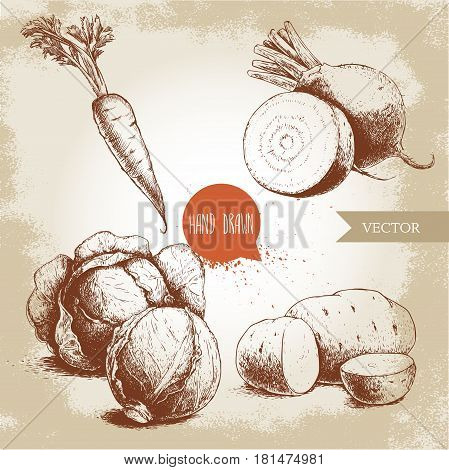 Hand drawn sketch style vegetables set. Half of cabbages beet roots potatoes and carrot with leafs. Farm fresh food on grunge vintage background.
