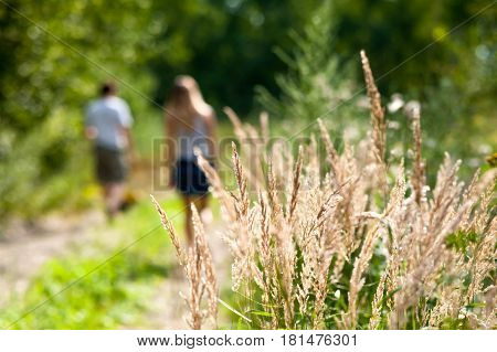 People are walking behind of the ears of wheat