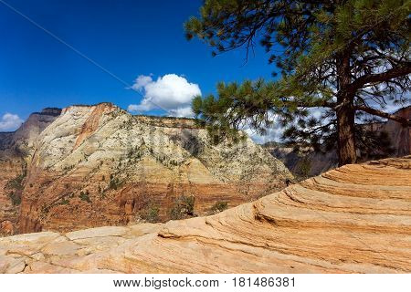 Colorful view of Zion Canyon from Angels Landing in Zion National Park in Utah