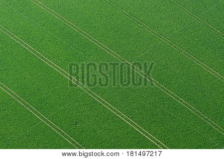 Aerial view of the spring sown field