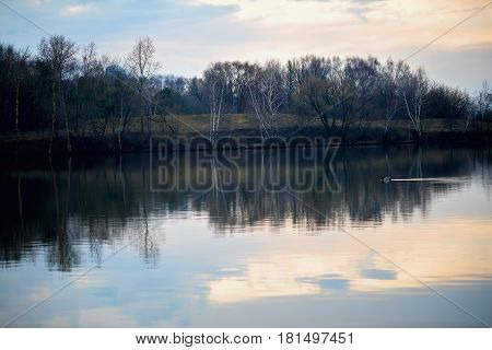 Early spring. Sunset and twilight on the river next to the forest. Concept of nature protection, seasons. Floating drake. With place for your text, for background use.