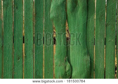 Texture of a tree from an old fence