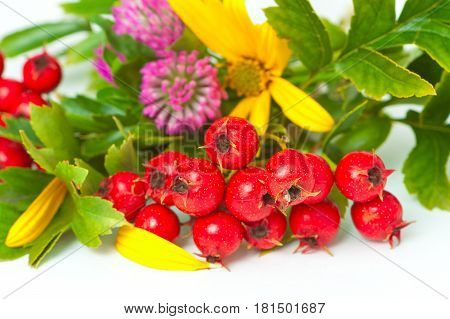 Berries Of Hawthorn, Clover And Flowers