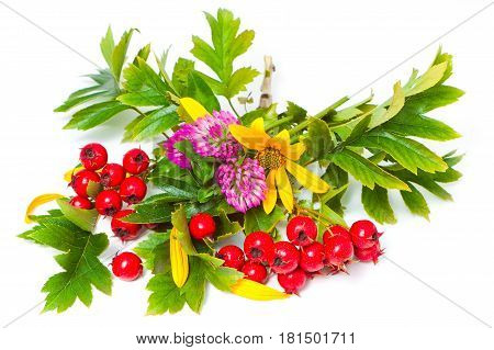 Hawthorn, Flowers And Clover