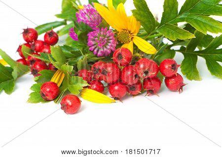 Berries Of Hawthorn Closeup