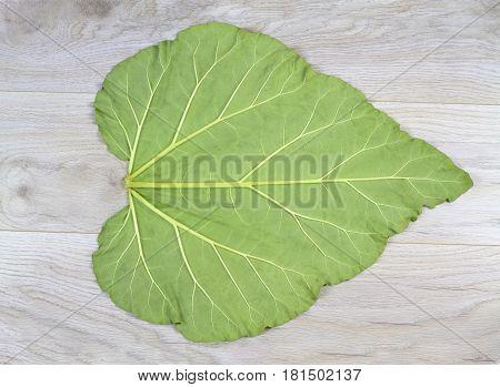 Big leaf texture ( rhubarb leaf ) close up image