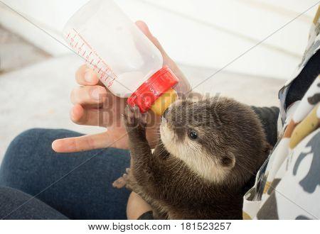 Zookeeper Feeding Baby Otter