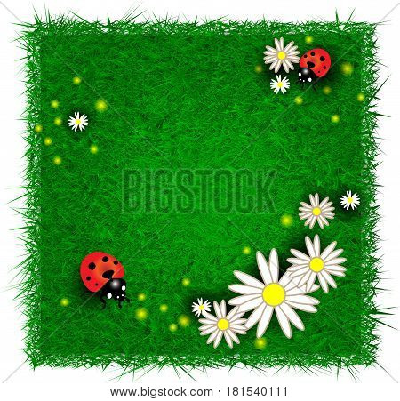 Eco design template with flowers and ladybugs