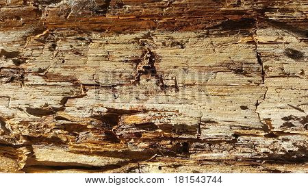 Rotten wood abstract texture. Wood with cracks