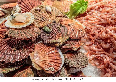Huge pile of fresh catch scallops and big shrimps at Rialto market, Venice,Italy.