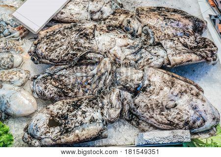 Fresh calamari with black ink at Rialto market, Venice,Italy.