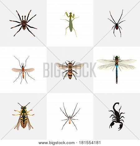 Realistic Wisp, Damselfly, Poisonous And Other Vector Elements. Set Of Animal Realistic Symbols Also Includes Grasshopper, Spinner, Insect Objects.