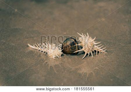 Beautiful Marine Shells In Sea Water